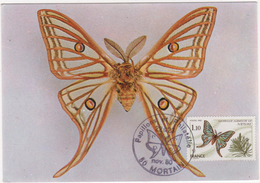 CARTE MAXIMUM  GRAELLSIA  ISABELLAE - Butterflies