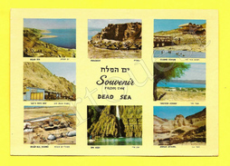CPSM Souvenir From The Dead Sea (Israel) Multivues - Israel