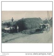 VCYTPA3749CPA-LFTMD11430TAVAC.Tarjeta Postal De VIZCAYA.Bueyes,agricultores,carreta De Heno.PAIS VASCO - Vacas
