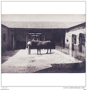 VLCATPA3201CPA-LFTMD9543TACRI.Tarjeta Postal DE VALENCIA.,Edificios,TORO.GRANJA LA VALLESA DE MANDOR.Valencia - Crías