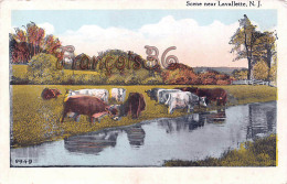 Scene Near Lavallette - Cows Vache Nature Park - Etats-Unis