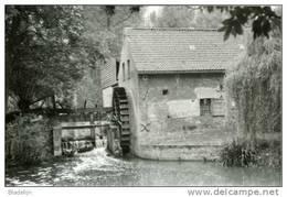 HERNE (Vlaams-Brabant) - Molen / Moulin - Waltrudismolen Of Rendriesmolen Op De Marke In 1979 - Herne