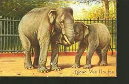Image Cartonnée - CACAO VAN HOUTEN - Elephant Indien - - Elefanten