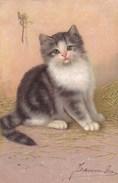 Belle CPA Illustrée  CHATS Joli CHATON Et La LIBELLULE Timbre 1905 - Katten