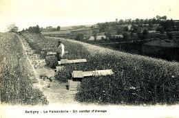 AF 61 / C P A -  XERTIGNY   (88)  LA FAISANDERIE  UN SENTIER D'ELEVAGE - Xertigny