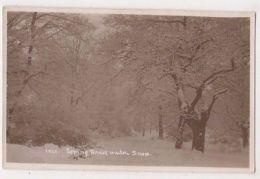 Epping Forest Under Snow, Essex RP Postcard, B659