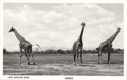 Kenya, East African Game, Giraffe Group (1950s) Skulina Pegas RPPC - Kenia
