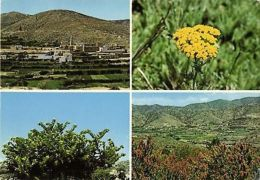 Saudi Arabia, ASIR, Multiview, Flower, Plants (1970s) - Saudi Arabia