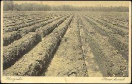Indonesia, Sugar Cane Plantation, Plant Channels (1910s) Postcard - Indonesia