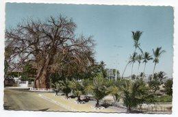 Madagascar--MAJUNGA-- Le Baobab Cpsm 14 X 9 N° N°37 K  éd Charifou  .....à Saisir - Madagascar