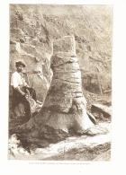 L'ARBRE FOSSILE DE MEONS ( HOUILLERES DE SAINT-ETIENNE )    1887 - Auvergne