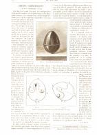 JOUETS SCIENTIFIQUES  ( L'OEUF DE CHRISTOPHE COLOMB )   1887 - Unclassified