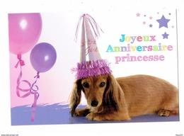 Grande Cpm - Chien Teckel - Joyeux Anniversaire Princesse - Chapeau De Fête Girl - Kiss Collection - Chiens