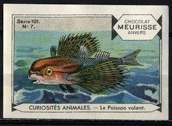 Meurisse - Ca 1930 - 101 - Curiosités Animales, Strange Animals - 7 - Le Poisson Volant, Flying Fish - Chocolat