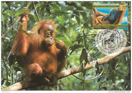 1998 UN Geneve FDC (maximum Card)  ORANG UTANG Monkey Stamps United Nations Cover