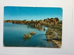 AK   LIBYA  WATERING - Libyen