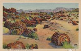 Arizona The Petrified Forest Fred Harvey - United States
