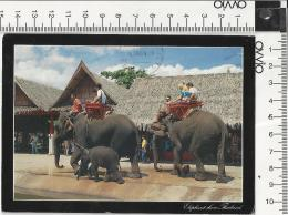 THAILANDIA)1990 Elefanti Al Rose Garden Viaggiata Affrancata Dall'INDONESIA - Tailandia