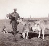 USA? Paysan Et Son Chien Nourrissant Ses Veaux Ancienne Photo Snapshot 1920