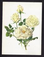 LOT De 6 GRANDES PLANCHES CHROMO PUBLICITAIRE CHOCOLAT COTE D'OR - ROSE Nommée Au Verso - Illustrateur A.M. TRECHSLIN - Côte D'Or