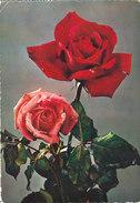 Carte Postale Semi-moderne - Fleurs - Rose - Fantaisies
