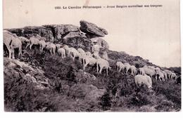 § La Corrèze Pittoresque - Jeune Bergère Surveillant Son Troupeau - France