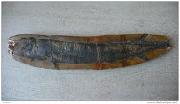 Fossile D'ASPIDORHYNCHUS - 42  X 9 Cm - Fossiles