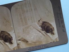 """(a) THE TRUSTED FRIEND """" Stereo Photo R.Y. YOUNG """" 1900 ( Voir Photo Pour Detail ) !! - Photos Stéréoscopiques"""