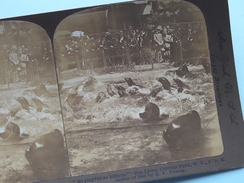 "As Playful As Kittens - SEA LIONS Central PARK N.Y. U.S.A. "" Stereo Photo "" 1901 !! - Photos Stéréoscopiques"