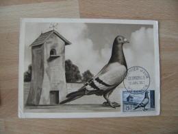 1957 Vincennes Colombophilie   Cm Carte Maximum - 1950-59