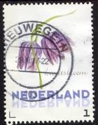 Nederland 2016, Netherlands, Niederlande, Pays-Bas, Holland, Fleur, Flower, Blumen, Kievitsbloem - Gebruikt