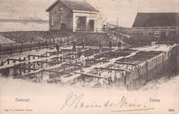 THOLEN CA. 1900 OESTERCULTUUR HUITRES VISSERIJ OESTERPUT - 2 SCANS - Tholen
