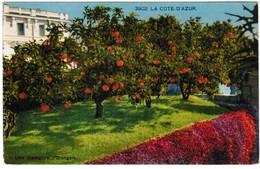 CPA Côte D'Azur Une Plantation D'orangers (pk32773) - Beaulieu-sur-Mer