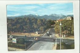 137161 FORTE DEI MARMI VIALE DEI PINI - Carrara