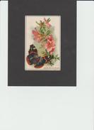 """CHROMO ?? - Fleur - Azalée Et Papillon """"Vulcain"""" -  (REF 352) - Ansichtskarten"""