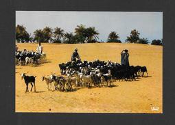 AFRIQUE - AFRIQUE EN COULEURS - TROUPEAU DE CHÈVRE - CLICHÉ  VLOO  PAR IRIS - Cartes Postales
