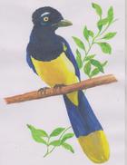 O) 2008 URUGUAY, ORIGINAL ART WORK DESIGNS, ALL OF THE WERE ISSUED ON STAMPS SCOTT 2231, MERCOSUR, BIRD-URRACA-CYANOCORA - Uruguay
