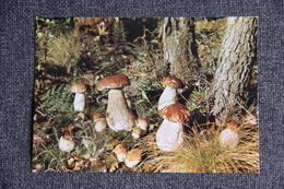Cueillette De Champignons Dans Nos Forêts - Agriculture