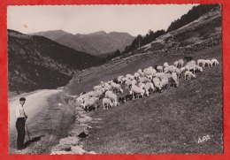 C11-  VALLS D'ANDORRA - SOLDEN - PASTURAGE - PATURAGE ALT. 1860 M.  (BERGER AVEC TROUPEAU - POUX ALBI  - 1952 - 2 SCANS) - Andorra