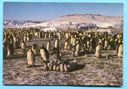 Marque Postale  KERGUELEN PORT AUX FRANCAIS  / CP - TAAF - Adelie - La Grande Famille -  Stamps Salmons ,saumons - TAAF : Terres Australes Antarctiques Françaises