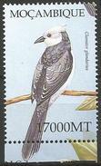 Mozambique 2002 - Great Spotted Cuckoo (Clamator Glandarius) - Koekoeken En Toerako's