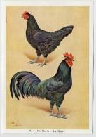 Fort - Hanen En Hennen - Coqs Et Poules - Roosters And Hens, Kippen, Poulets, Chickens - 9 - Unclassified