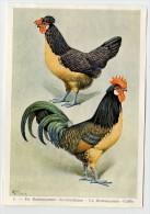 Fort - Hanen En Hennen - Coqs Et Poules - Roosters And Hens, Kippen, Poulets, Chickens - 3 - Unclassified