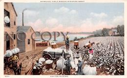 Cotton Picking - Milwakee Public Museum Miniature Group - Milwaukee