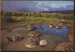 °°° GF15 - ECUADOR - ISLA ISABELA - TORTUGAS GIGANTES O GALAPAGOS - VOLCAN ALCEDO - 1993 With Stamps °°° - Ecuador