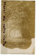- Sous Bois à La Forêt De SAOU - ( Drôme ), Très Rare, Peu Courante, Cliché Ancien, Non écrite, TBE, Scans. - France