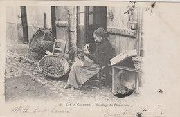 LOT ET GARONNE   CISELAGE DU CHASSELAS - France