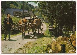 63 - AUVERGNE - Atelage De Boeufs - éd. La Cigogne N° 63.000.03 - 1976 - Attelage - France