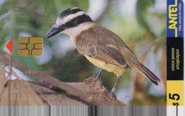 URUGUAY PHONECARD ANTEL(chip) BIRDS-Tc 75a-9/99-150000pcs-USED(bx1) - Uccelli Canterini Ed Arboricoli