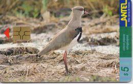 URUGUAY PHONECARD ANTEL(chip) BIRDS-Tc 79a-9/99-150000pcs-USED(bx1) - Oiseaux
